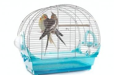 Milyen madárkalitkát vásároljak?